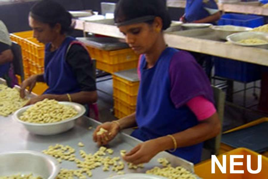 sorting the hulled cashews