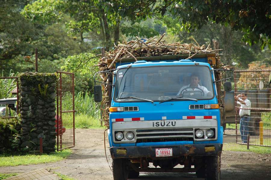 Sugar cane delivery in Assukar
