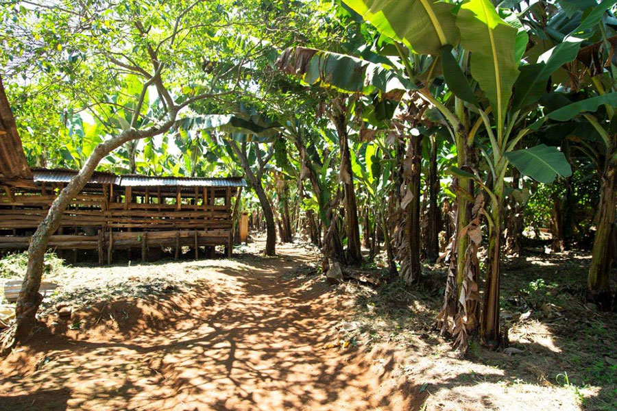 Outside area of the Hekima School: a mixed forest with shady banana trees and a barn for small domestic animals.