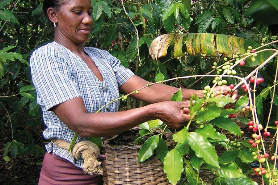 rapunzel kaffee nachhaltiger bio anbau in mischkultur. Black Bedroom Furniture Sets. Home Design Ideas