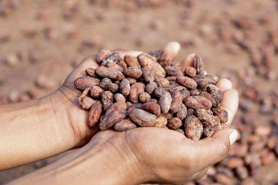In earlier times, cocoa beans were so valuable that they were used as currency