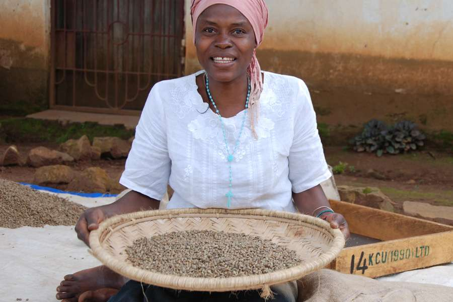 Worker at the KCU coffee Cooperative