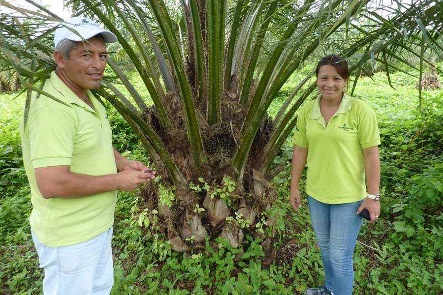 Employees from Natural Habitats in front of an oil palm