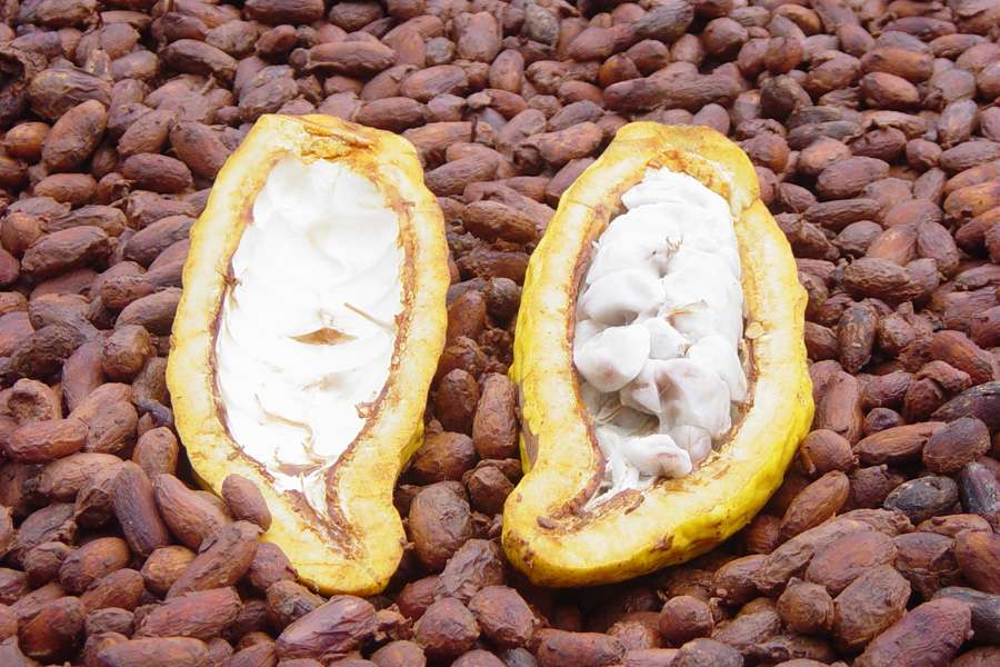 The pulp of the opened cocoa pod