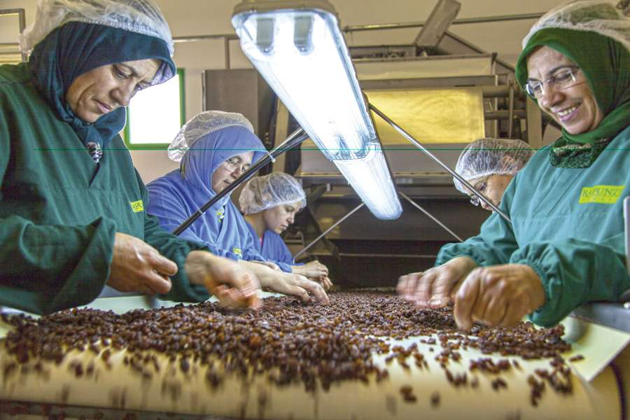 Seats and good illumination facilitate the work for the female employees who sort the sultanas by hand